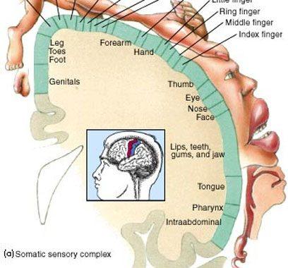 جلسه اول: تکنیک آدمک مغزی