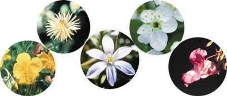 گل هاي مورد استفاده در زمينه  ترس